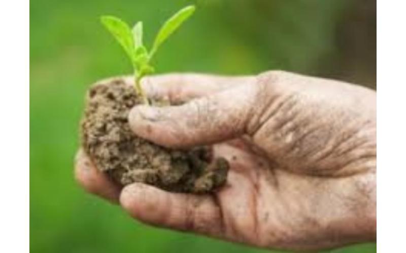 DESBri, Slow Food, CSA