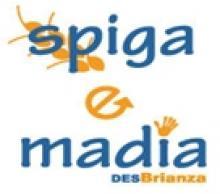 Progetto Spiga & Madia nel parco di Monza